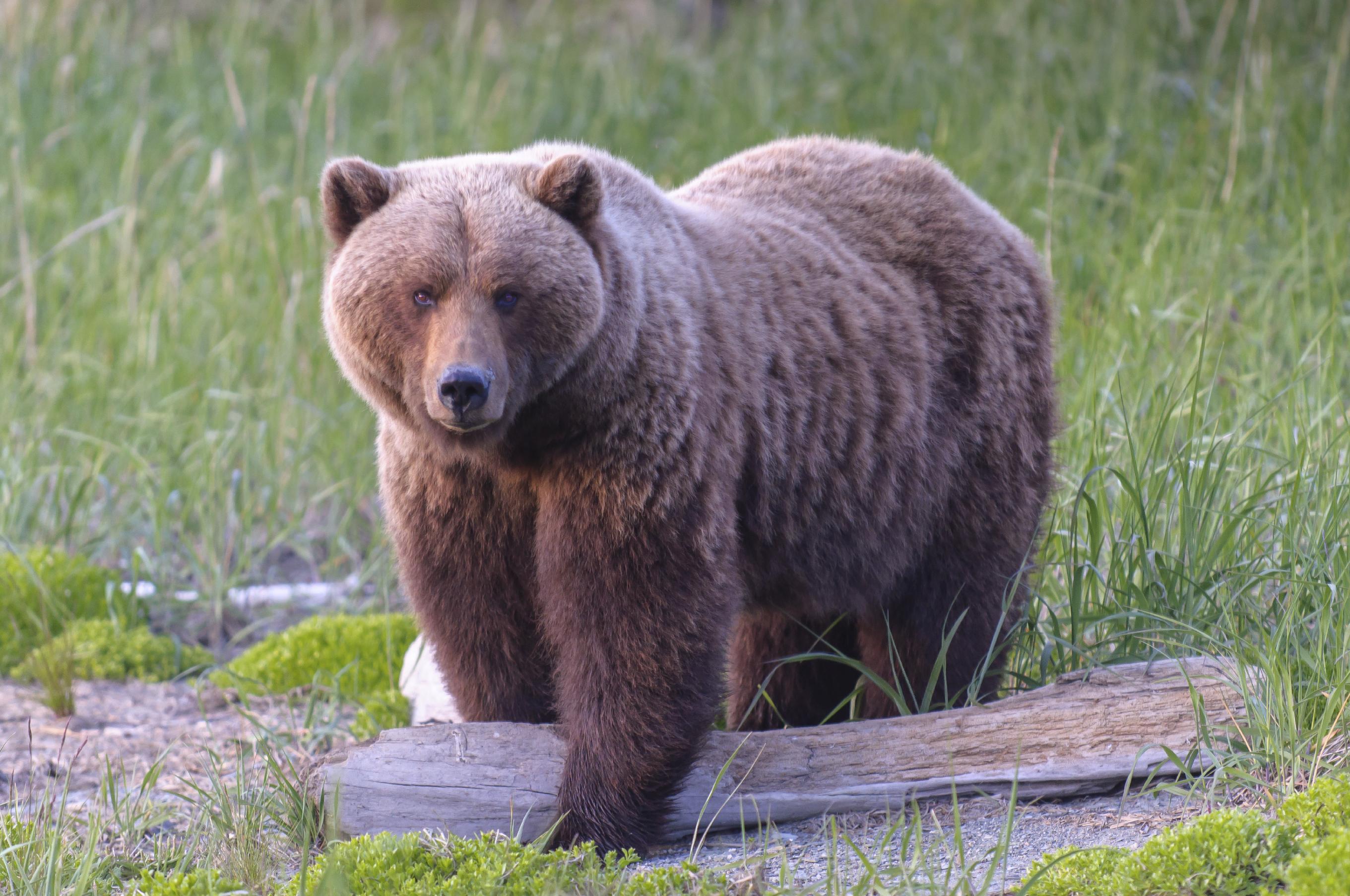 Bear - Big Game blog